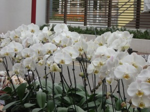 Orchids in the Hong Kong Flower Market